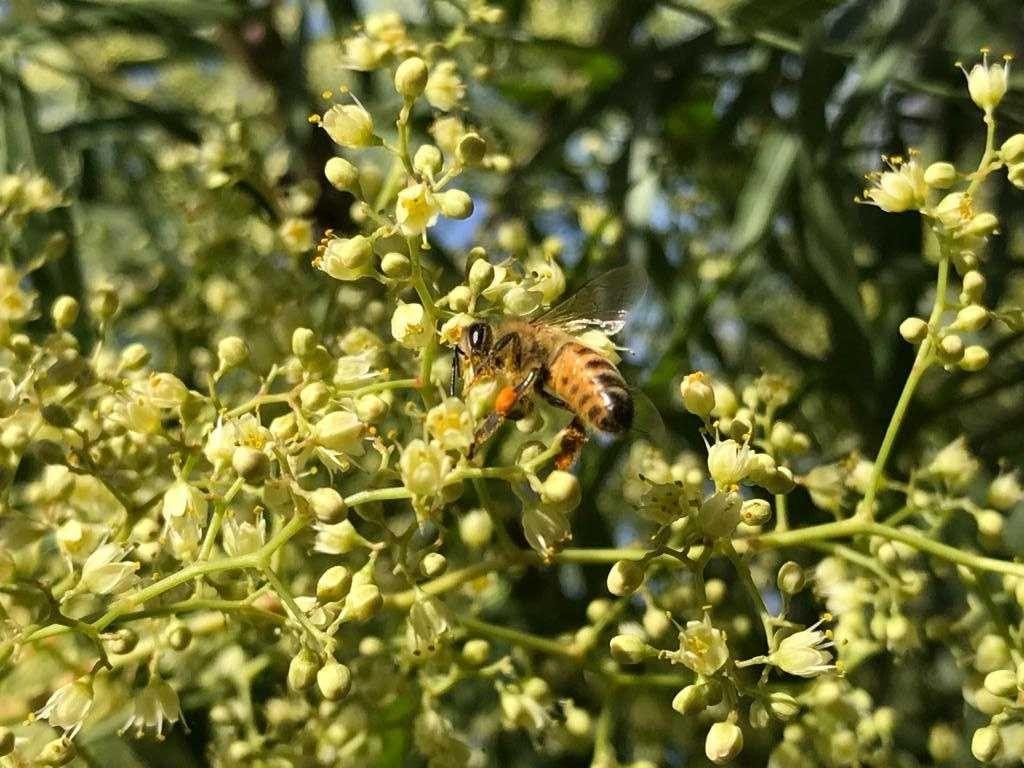 la vida de una abeja
